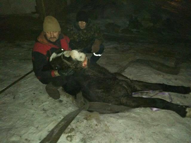 В Кривом Роге в канализационный колодец провалилась лошадь (ФОТО), фото-2