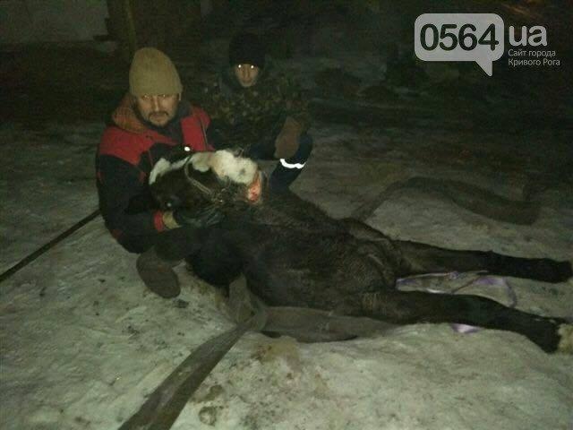 В Кривом Роге: открыли стрельбу по кошкам, канализационные стоки попали в реку, лошадь провалилась в открытый люк, фото-3