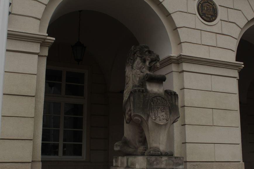 Леви в серці Львова: огляд найгарніших левів, які роблять наше місто особливим (ФОТОРЕПОРТАЖ), фото-5