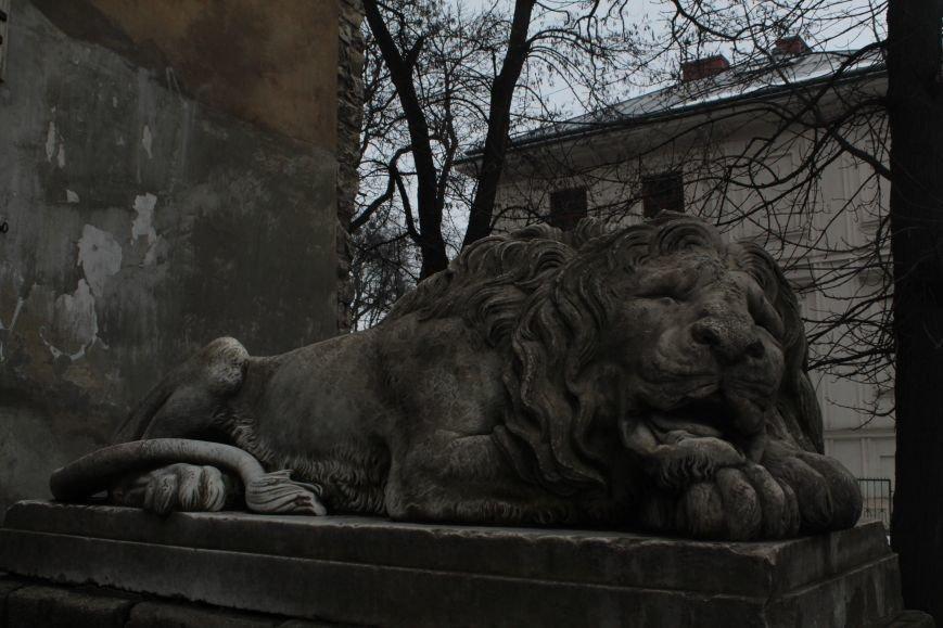 Леви в серці Львова: огляд найгарніших левів, які роблять наше місто особливим (ФОТОРЕПОРТАЖ), фото-14