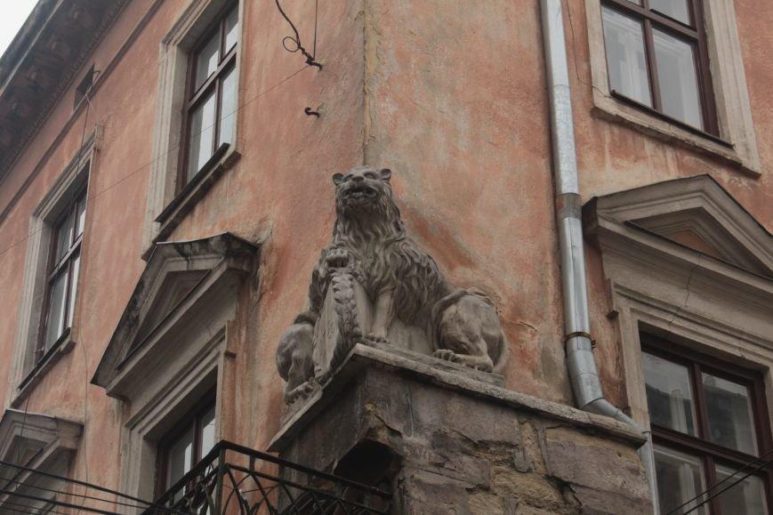 Леви в серці Львова: огляд найгарніших левів, які роблять наше місто особливим (ФОТОРЕПОРТАЖ), фото-2