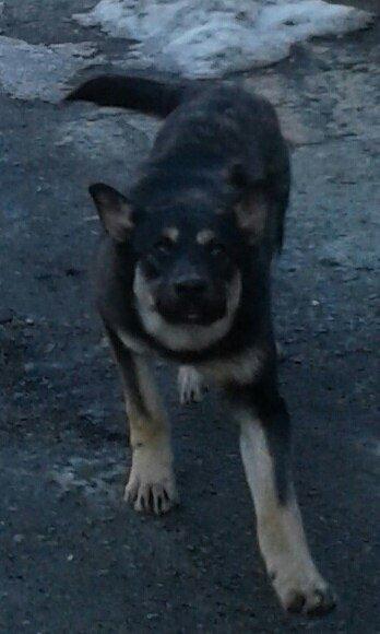Невыдуманная история: собака подалась на поиски лучшей жизни после смерти хозяйки, фото-2