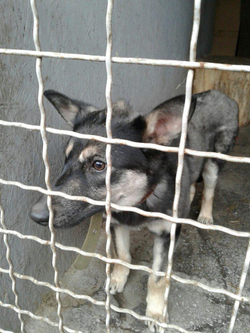 Невыдуманная история: собака подалась на поиски лучшей жизни после смерти хозяйки, фото-1
