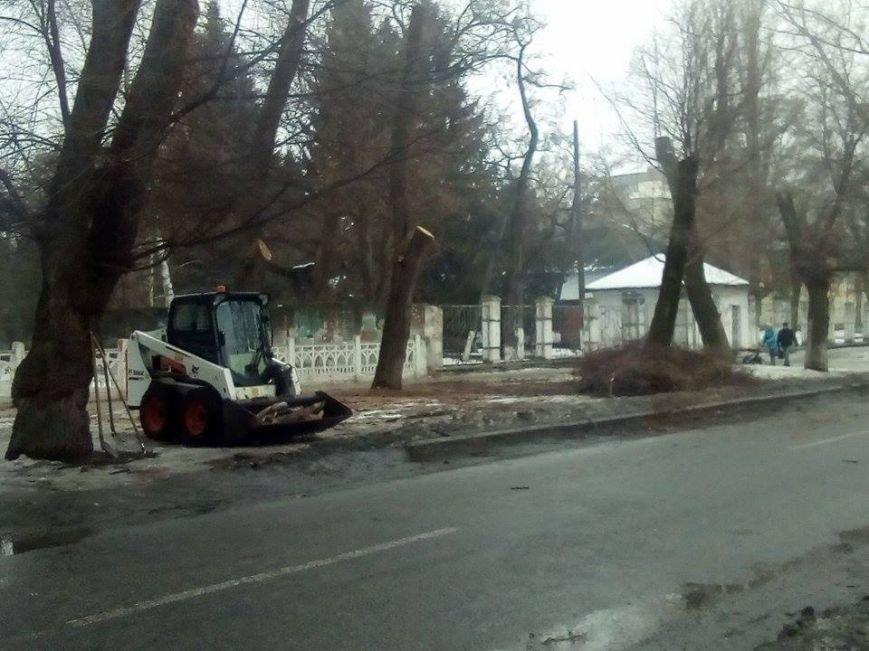 Новомосковск 0569 деревья 2