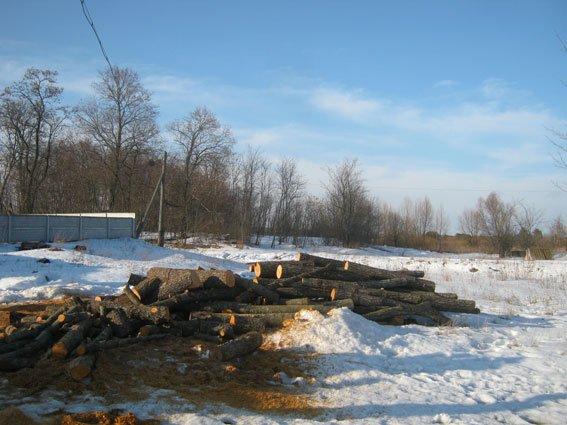 На Черниговщине лесоруб-браконьер вырубил ольхи на 300 тысяч гривен, фото-1
