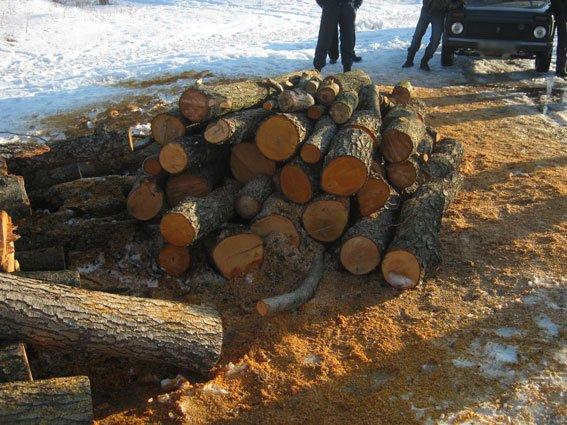 На Черниговщине лесоруб-браконьер вырубил ольхи на 300 тысяч гривен, фото-2