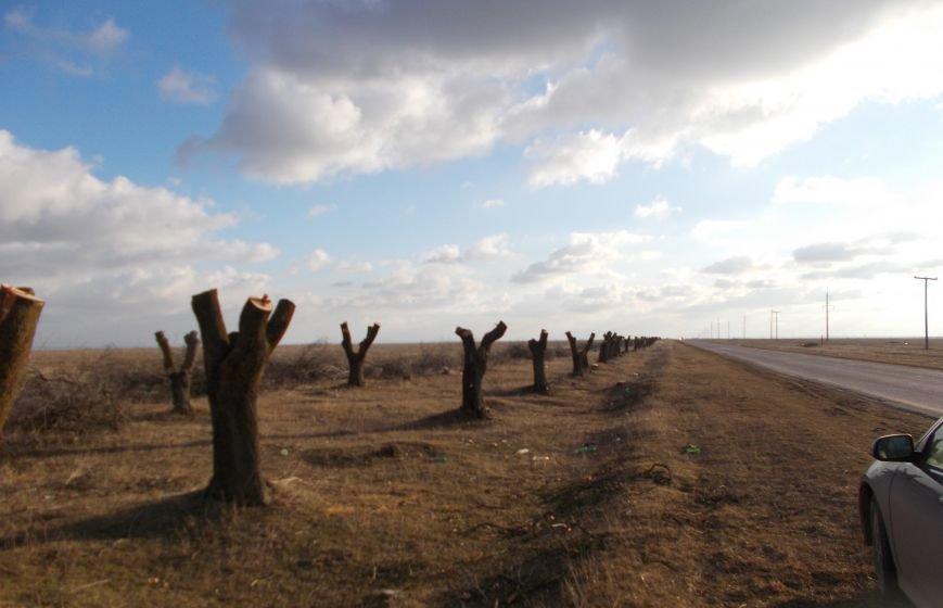 вырубка деревьев саки