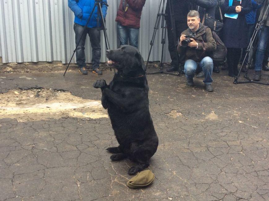 В Мариуполе полицейские открыли кинологический центр с лабрадорами, овчарками и ризеншнауцером (ФОТО+ВИДЕО), фото-10