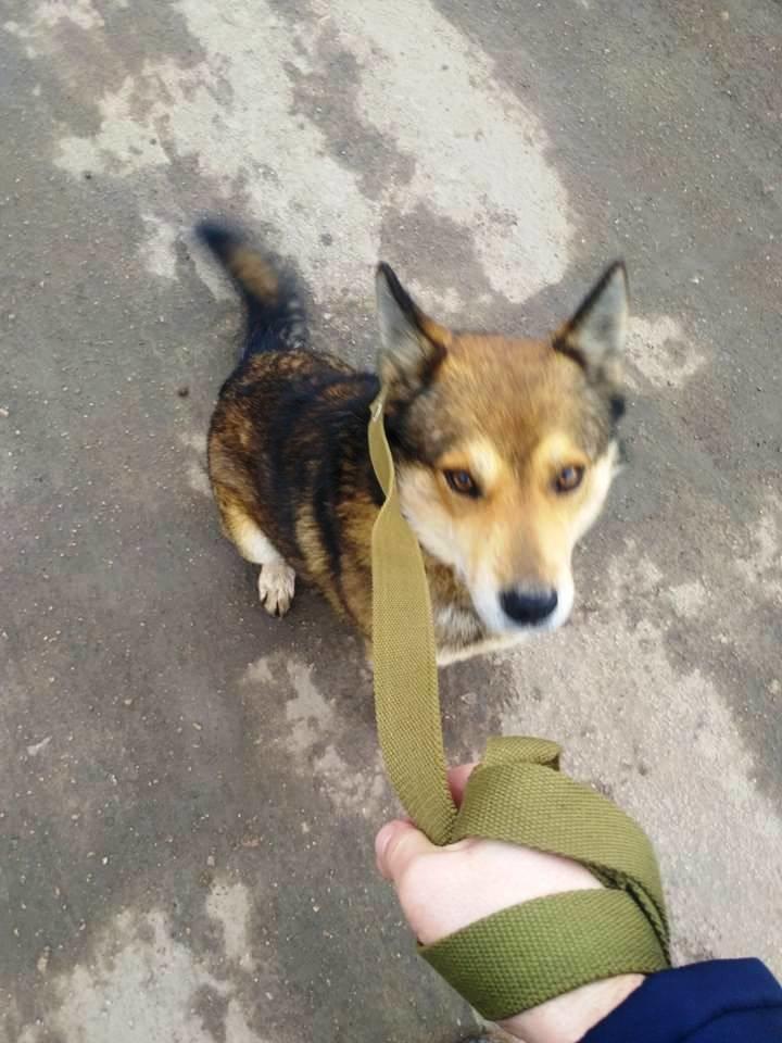 Херсонский журналист неожиданно нашел свою давно пропавшую собаку (фото), фото-2