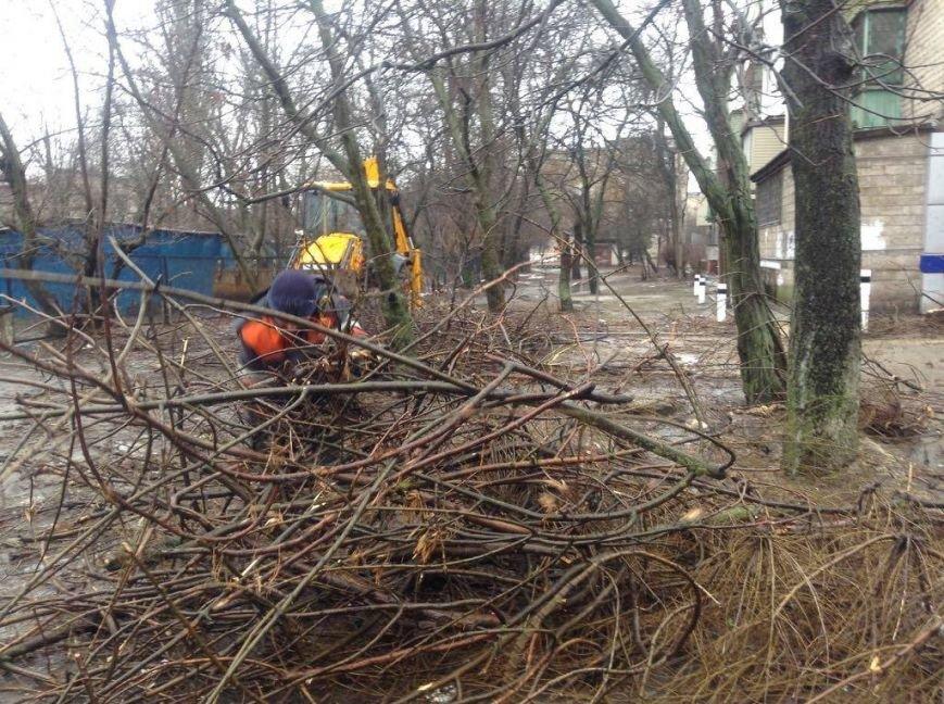 В Мариуполе ОСМД заказало вырубку своих деревьев депутату (ФОТО), фото-2