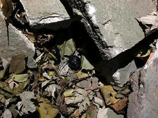 В Вишневом поймана девушка, которая распространяла наркотики на территории города (ФОТО), фото-1