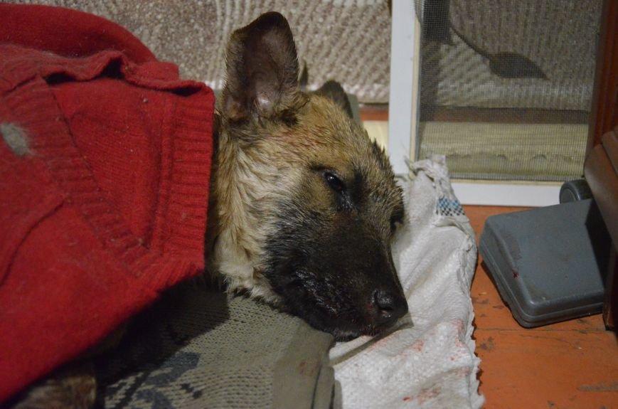 В Мариуполе спасают сбитую под дождем собаку (ФОТО), фото-1