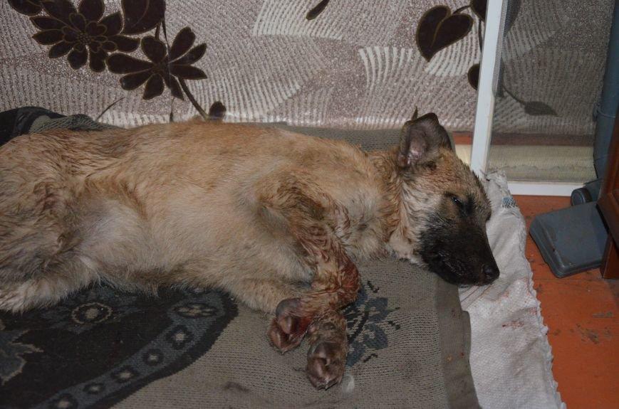 В Мариуполе спасают сбитую под дождем собаку (ФОТО), фото-2
