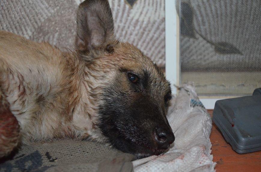 В Мариуполе спасают сбитую под дождем собаку (ФОТО), фото-3