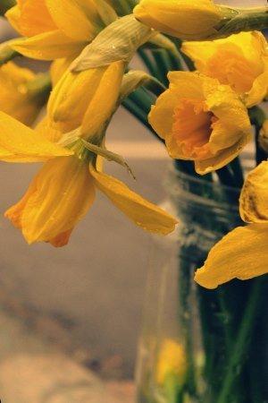 В Черноморске пройдут весенние цветочные ярмарки, фото-6