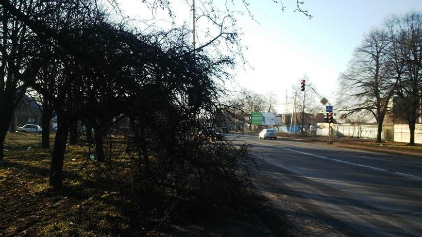 Після резонансу у ЗМІ комунальники прибрали аварійне дерево з тротуару Гагаріна: фото, фото-2