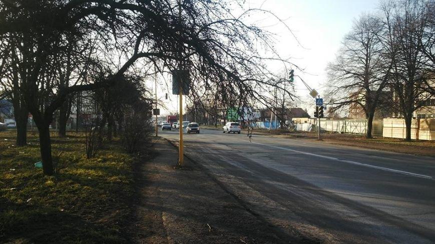 Після резонансу у ЗМІ комунальники прибрали аварійне дерево з тротуару Гагаріна: фото, фото-1