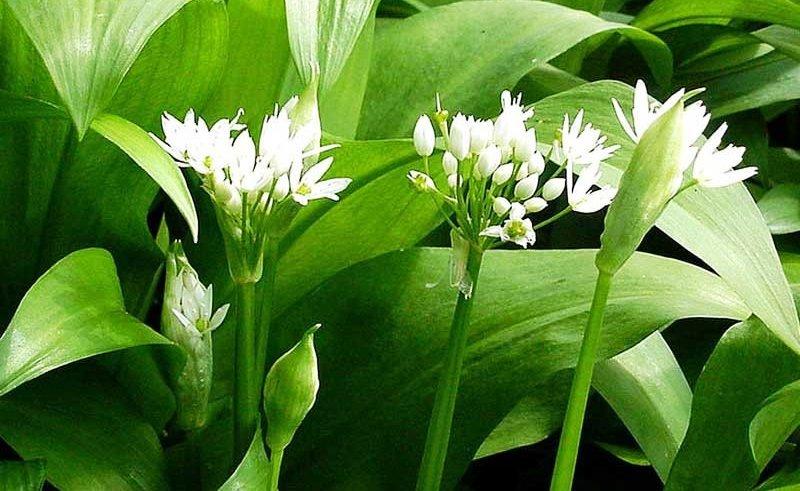 Букет первоцветов может обойтись черниговцам в несколько тысяч гривень, фото-1