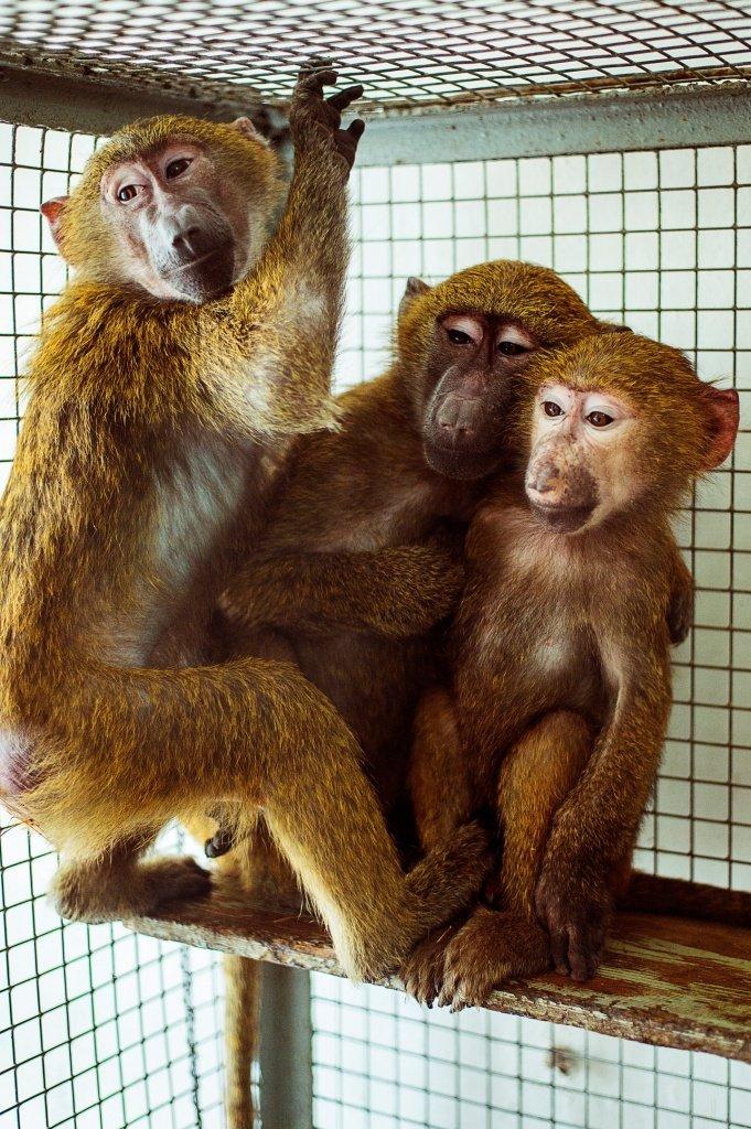 Изъятые у контрабандистов обезьяны и кенгуру поселились в зоопарке Ростова, фото-2