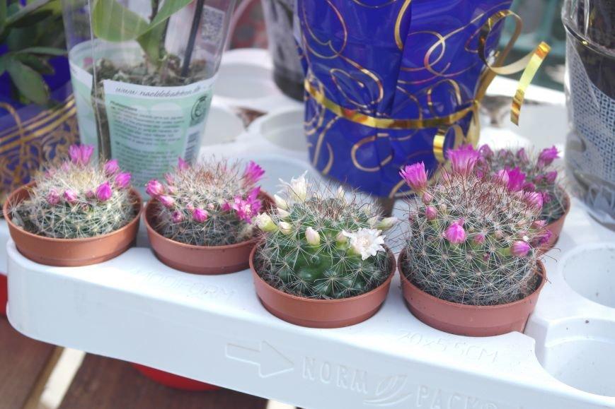 Розы, тюльпаны, орхидеи и мимоза: во сколько мужчинам Покровска обойдется букет на 8 марта?, фото-20