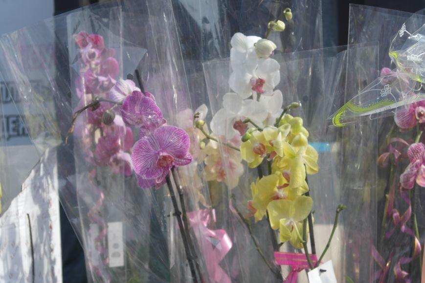 Розы, тюльпаны, орхидеи и мимоза: во сколько мужчинам Покровска обойдется букет на 8 марта?, фото-24