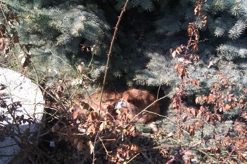 На Херсонщині рятували з каналізації собаку (фото), фото-2