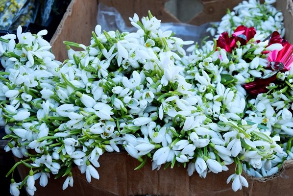 В Черноморске сегодня открылись яркие цветочные ярмарки (фото), фото-9