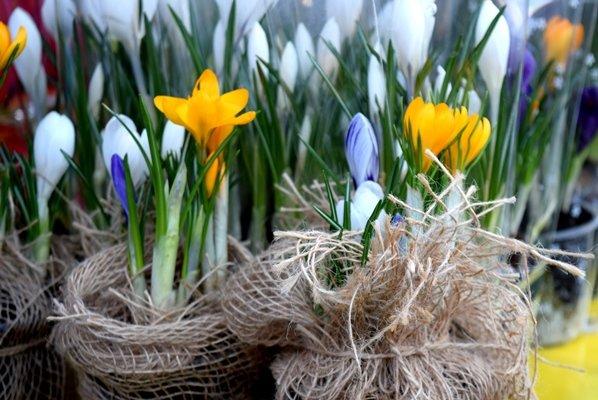 В Черноморске сегодня открылись яркие цветочные ярмарки (фото), фото-4