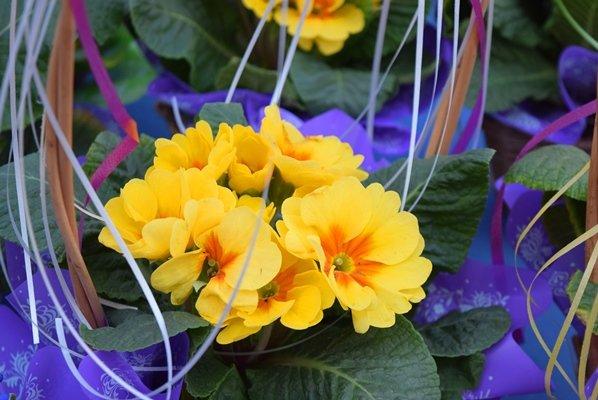 В Черноморске сегодня открылись яркие цветочные ярмарки (фото), фото-7