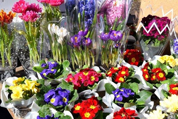 В Черноморске сегодня открылись яркие цветочные ярмарки (фото), фото-2