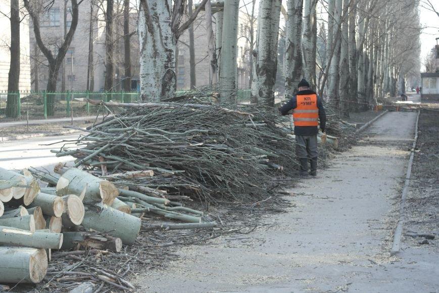 Обрезка по-покровски: Если бы деревья умели говорить, они взмолились бы о пощаде, фото-1