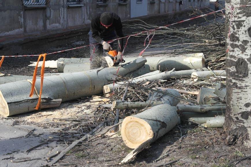 Обрезка по-покровски: Если бы деревья умели говорить, они взмолились бы о пощаде, фото-5