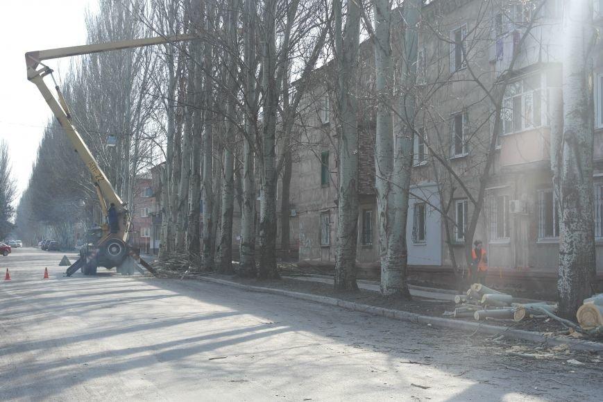 Обрезка по-покровски: Если бы деревья умели говорить, они взмолились бы о пощаде, фото-2