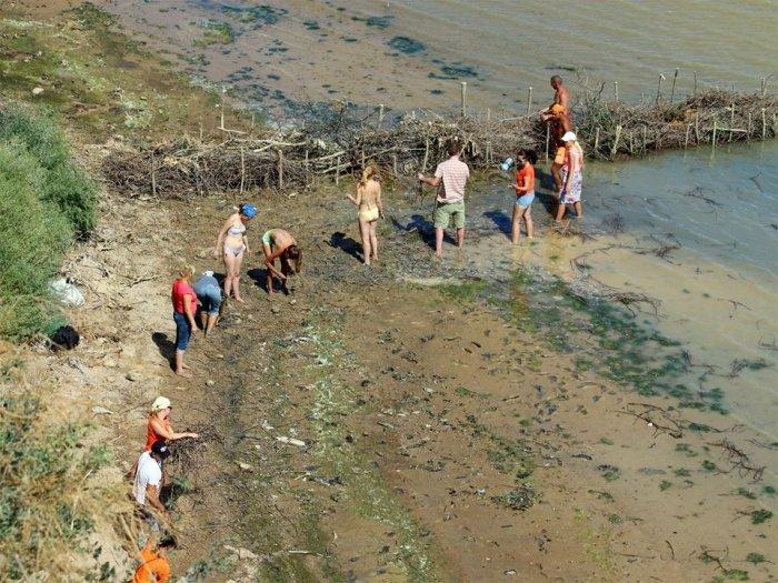 Успешный эксперимент: в Одесской области экоактивисты помогают формироваться естественным пляжам, фото-5