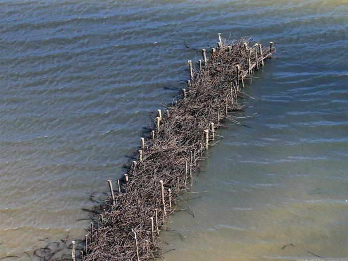 Успешный эксперимент: в Одесской области экоактивисты помогают формироваться естественным пляжам, фото-3