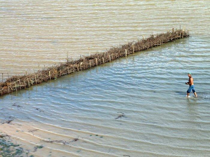Успешный эксперимент: в Одесской области экоактивисты помогают формироваться естественным пляжам, фото-4