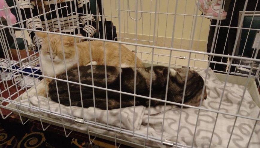 В Актау прошла первая выставка кошек, фото-1