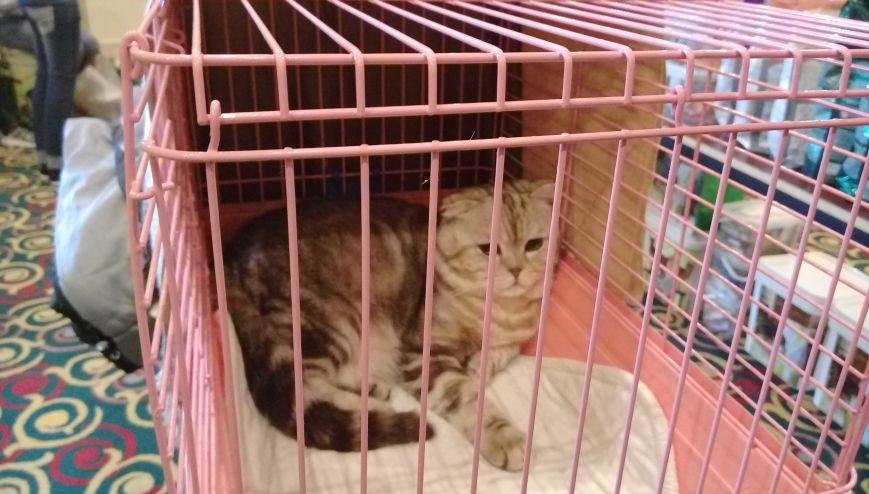 В Актау прошла первая выставка кошек, фото-2