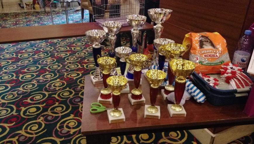 В Актау прошла первая выставка кошек, фото-3