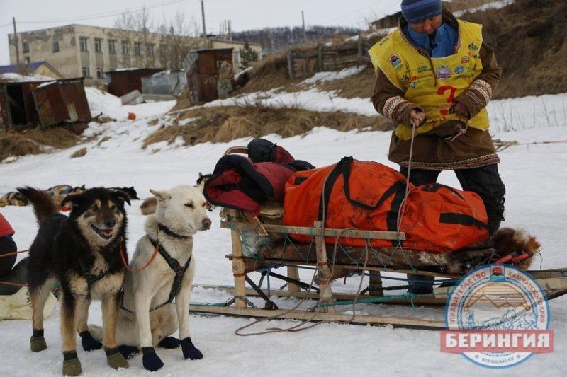 На Камчатке каюры «Берингии-2017» прошли уже 504 км, фото-5