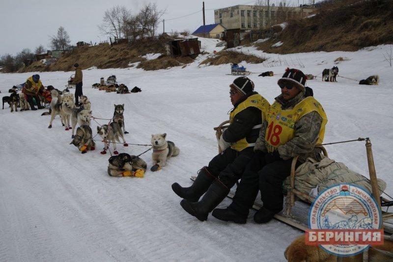 На Камчатке каюры «Берингии-2017» прошли уже 504 км, фото-4