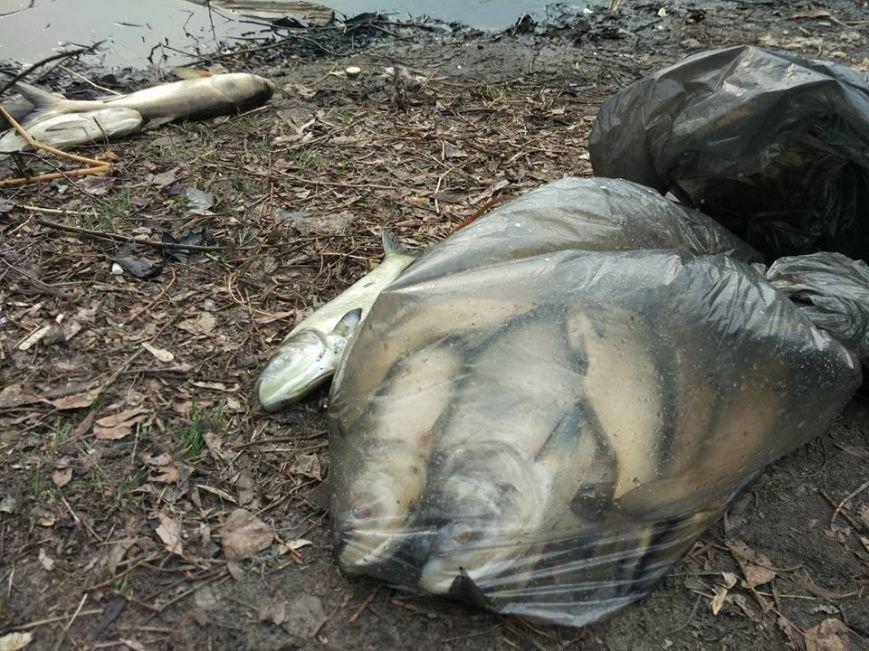 В озере на Позняках произошел массовый мор рыбы (ФОТО), фото-5