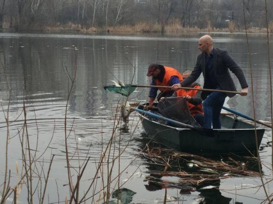 В озере на Позняках произошел массовый мор рыбы (ФОТО), фото-2