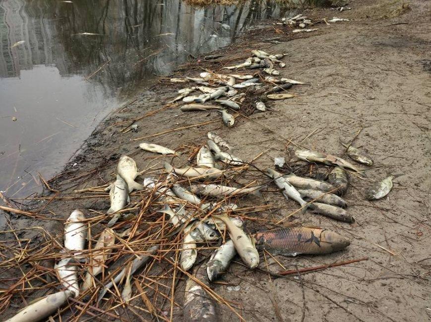 В озере на Позняках произошел массовый мор рыбы (ФОТО), фото-4