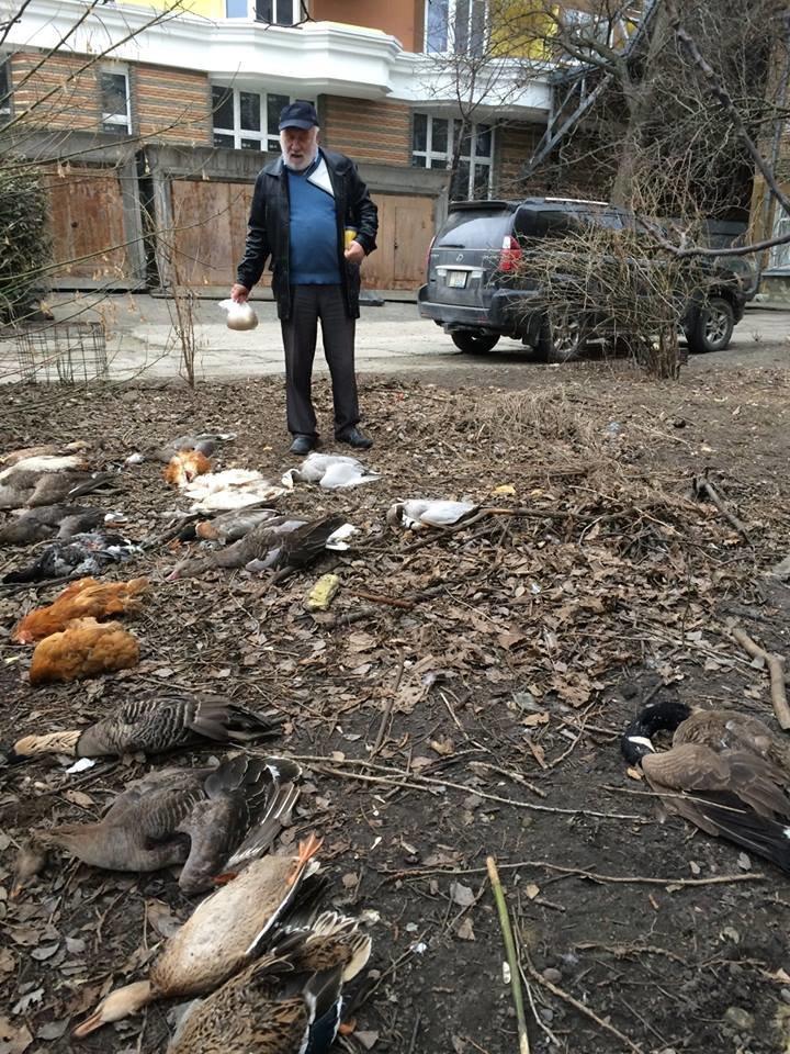 В Киеве отравили редких птиц (ФОТО), фото-2