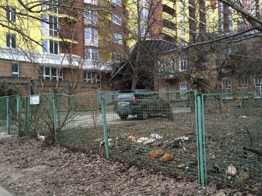 В Киеве отравили редких птиц (ФОТО), фото-1