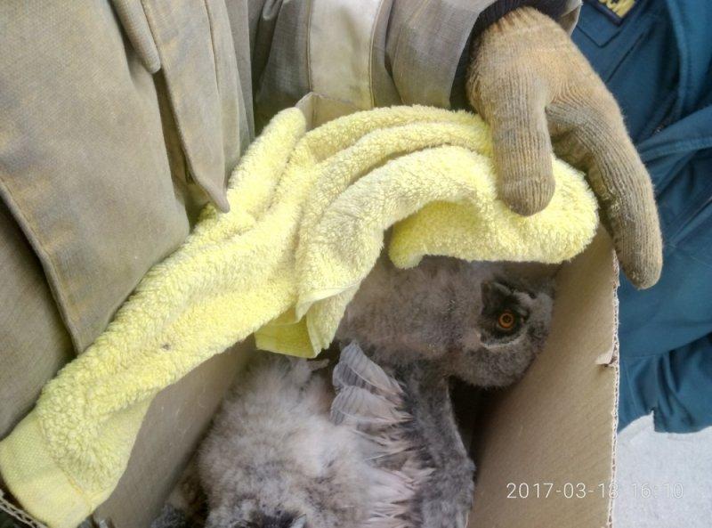 В Ростовской области пожарные спасли совят и устроили с ними фотосессию, фото-3