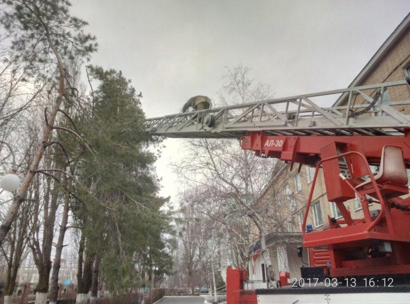 В Ростовской области пожарные спасли совят и устроили с ними фотосессию, фото-2