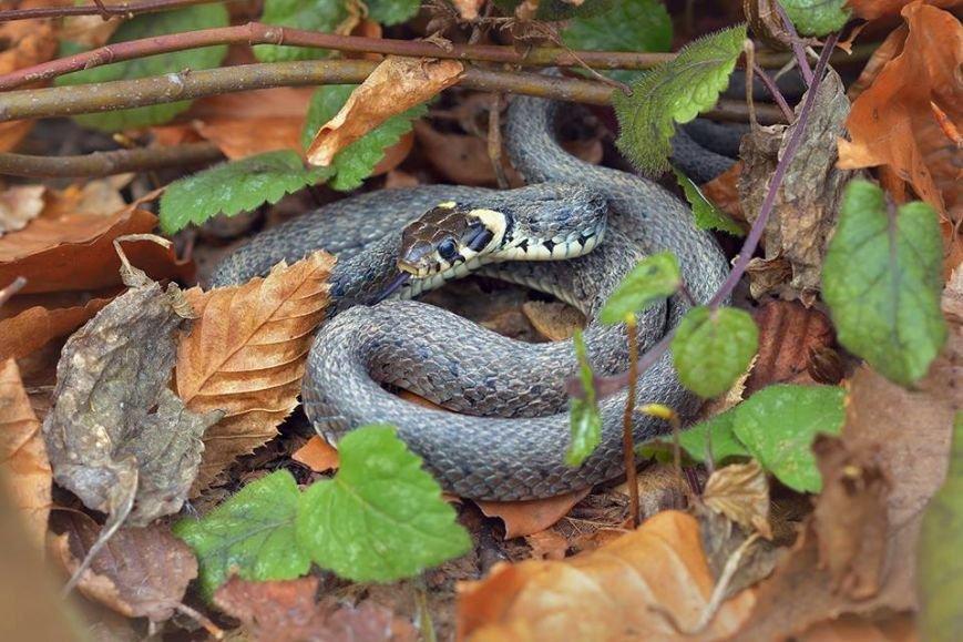В Ужгороді прокинулися змії: фото, фото-1