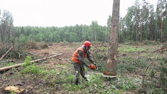 Закарпатські лісівники прокоментували смертельний інцидент на Ужгородщині: фото, фото-1